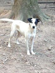 Mutt Dog For Adoption in Albemarle, NC, USA