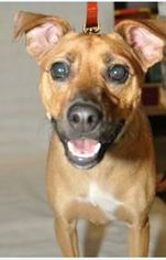 Mutt Dog For Adoption in Frisco, TX, USA