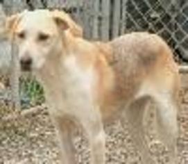 Mutt Dog For Adoption in Savannah, MO, USA