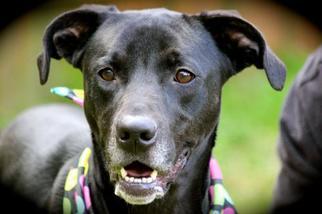 Mutt Dog For Adoption in Marietta, GA