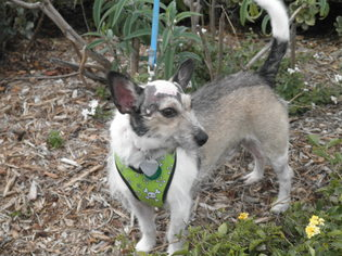 Mutt Dog For Adoption in Imperial Beach, CA