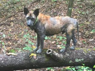 Mutt Dog For Adoption in Morehead, KY, USA