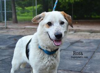 Mutt Dog For Adoption in Kansas City, MO