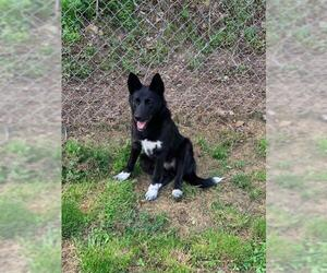 Mutt Dogs for adoption in Lewistown, PA, USA