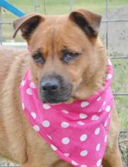 Mutt Dog For Adoption in Liverpool, TX