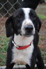 Mutt Dog For Adoption in Albemarle, NC, USA