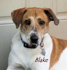 Mutt Dog For Adoption in Oklahoma City, OK
