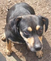 Beagle Mix Dog For Adoption in Pembroke, GA, USA