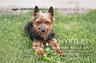 Mutt Dog For Adoption in St. Louis Park, MN