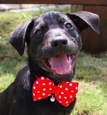 Mutt Dog For Adoption in San Ramon, CA