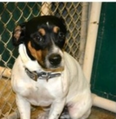 Mutt Dog For Adoption in Slidell, LA, USA