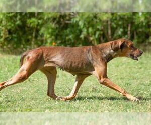 Mutt Dogs for adoption in Sarasota, FL, USA