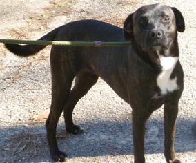 Mutt Dog For Adoption in Livingston, TX, USA