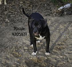 Basset Hound Mix Dog For Adoption in San Antonio, TX