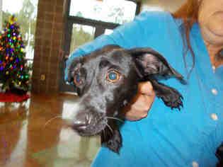 Rescue dachshund louisiana