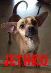 Chihuahua Mix Dog For Adoption in Waycross, GA, USA