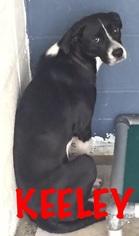 Mutt Dog For Adoption in Waycross, GA, USA
