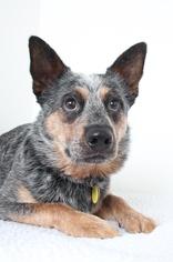 Mutt Dog For Adoption in Eden Prairie, MN, USA