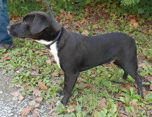 Mutt Dog For Adoption in White Bluff, TN, USA
