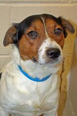 Mutt Dog For Adoption in Columbia, TN, USA
