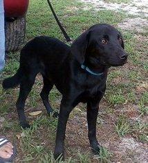 Mutt Dog For Adoption in Smithfield, NC