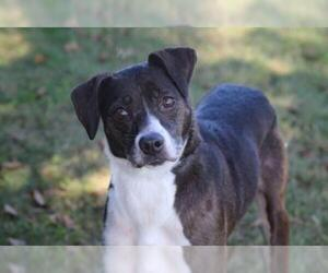 Jack Russell Terrier-Unknown Mix Dogs for adoption in Natchitoches, LA, USA