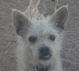 Mutt Dog For Adoption in Los Angeles, CA