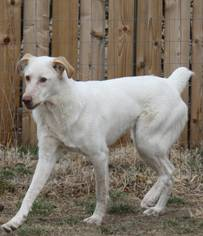 Pointer Mix Dog For Adoption in Colorado Springs, CO