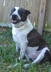 Mutt Dog For Adoption in Arcadia, FL