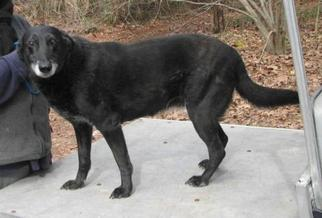 Mutt Dog For Adoption in Cochran, GA