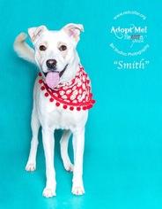 Australian Shepherd Mix Dog For Adoption in Houston, TX