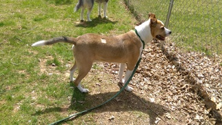 Mutt Dog For Adoption in Gilbertsville, PA, USA
