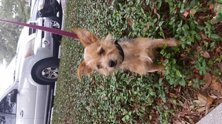 Mutt Dog For Adoption in Tampa, FL