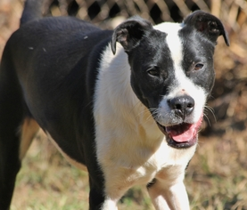 Pointer Mix Dog For Adoption in Temple, GA, USA