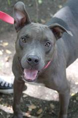 Mutt Dog For Adoption in Washington, DC