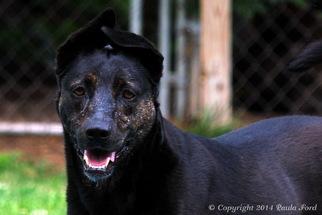 Mutt Dog For Adoption in Elizabeth City, NC, USA