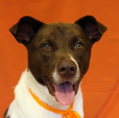 Collie Mix Dog For Adoption in San Francisco, CA, USA