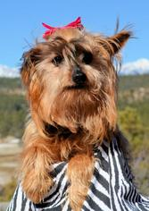 Mutt Dog For Adoption in Bon Carbo, CO