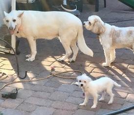 German Shepherd Dog Dog For Adoption in Dunnellon, FL, USA