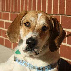 Mutt Dog For Adoption in Fredericksburg, VA, USA