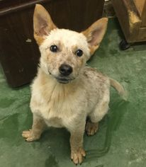 Mutt Dog For Adoption in Phoenix , AZ, USA