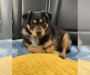 Mutt Dogs for adoption in San Diego, CA, USA