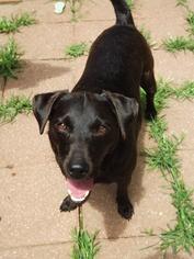 Mutt Dog For Adoption in Harrison, AR