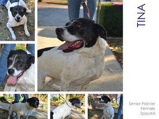 Pointer Mix Dog For Adoption in Cochran, GA, USA