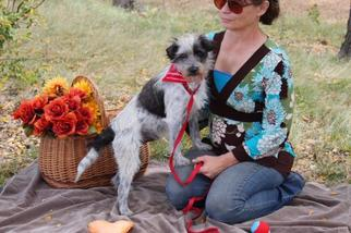 Affen Terrier Dogs for adoption in Arlington, TX, USA