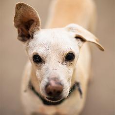 Mutt Dog For Adoption in Kanab, UT