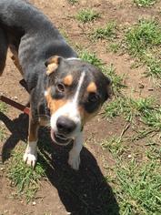 Mutt Dog For Adoption in Dallas, TX