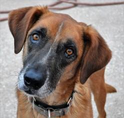 Mutt Dog For Adoption in Kansas City, MO, USA