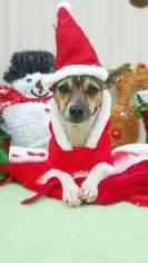 Rat-Cha Dog For Adoption in Baton Rouge, LA, USA