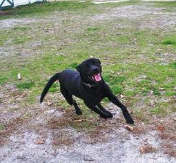 Mutt Dog For Adoption in Smithfield, NC, USA